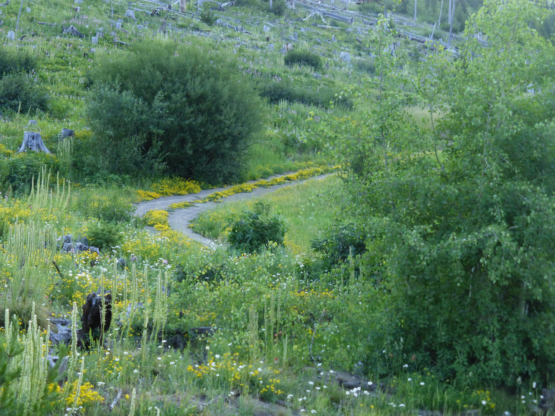 Driving to the trailhead with wildflowers