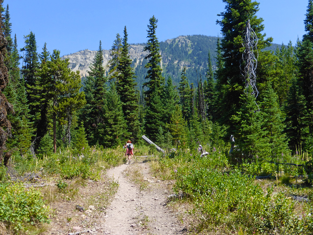 Photo of a wilderness trail.