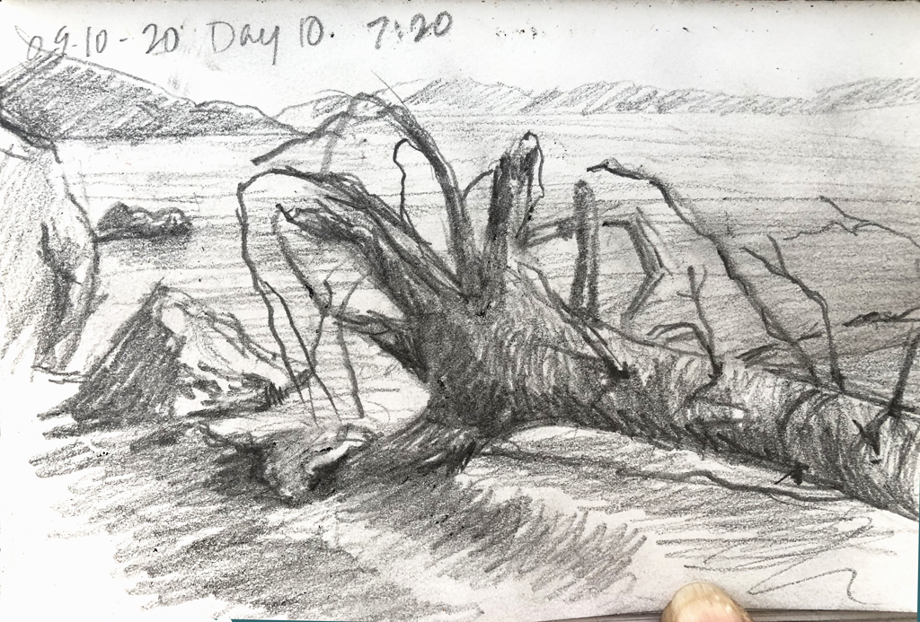 Anchored Roots sketch
