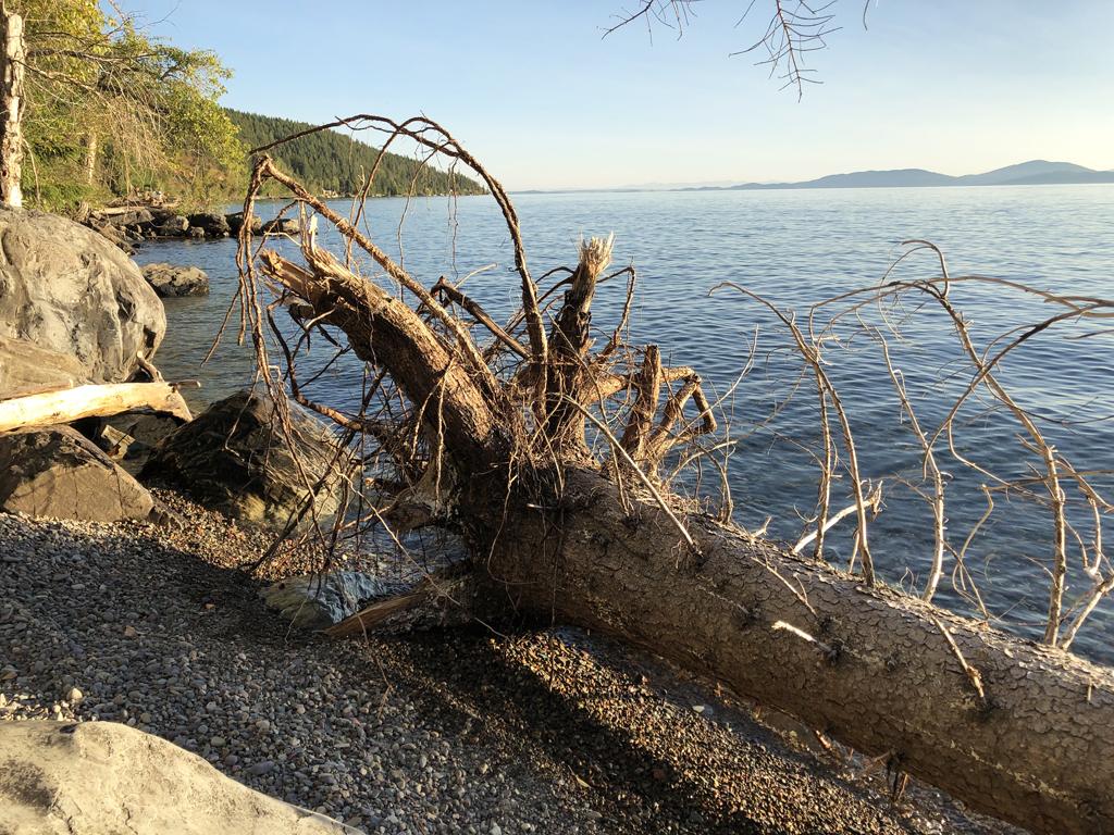 Photo of Flathead Lake shoreline.