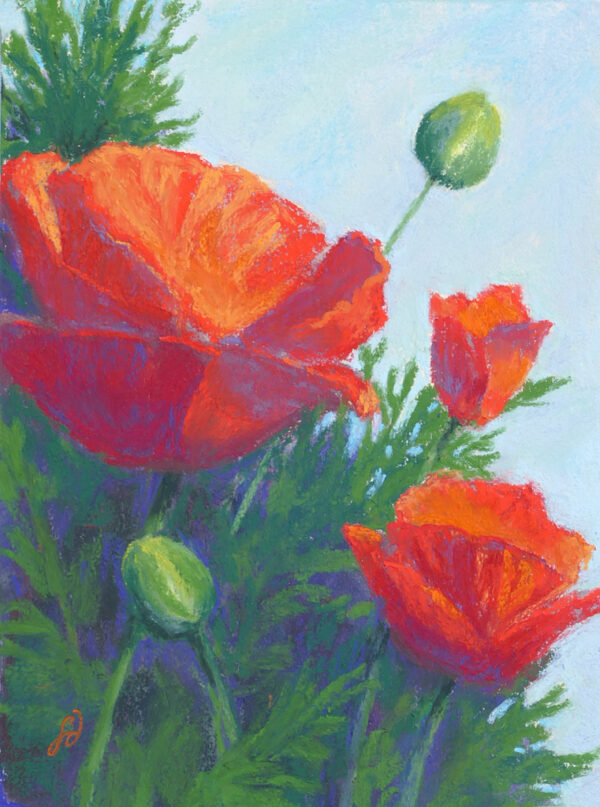 Pastel painting of poppies by Francesca Droll.