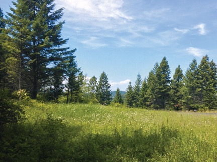 Photo of meadow.